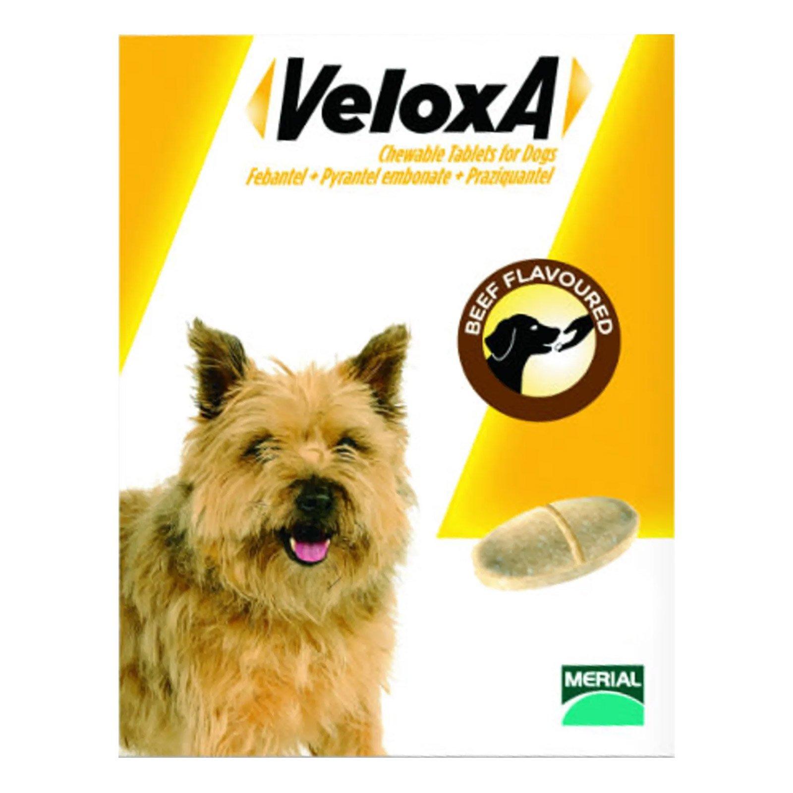 131190199377000451veloxa-chew-tabs-dog